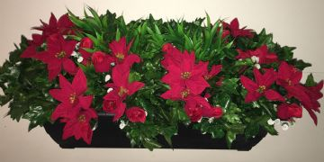 Red poinsettia & Rose Bud Bush - Black 70 cm Trough with Flowers